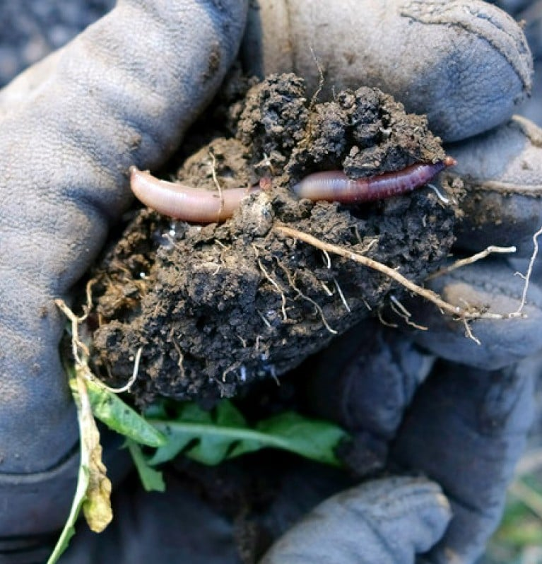 Worms break down organic material