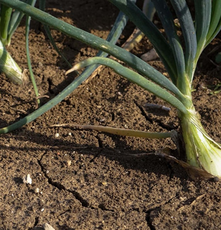 ONIONS - THE FALL TEST